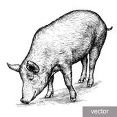 Engrave isolated pig vector illustration sketch linear art