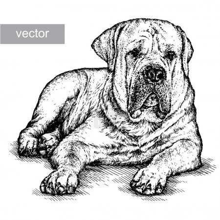 Illustration for Engrave isolated dog vector illustration sketch. linear art - Royalty Free Image