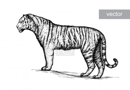 engrave tiger illustration