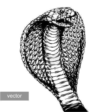 Illustration pour Graver isolé cobra attaque vectoriel illustration croquis. art linéaire - image libre de droit