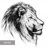 engrave lion illustration