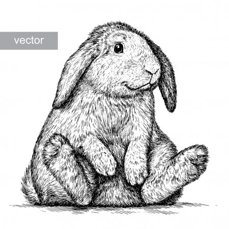 Illustration for Engrave isolated rabbit vector illustration sketch. linear art - Royalty Free Image