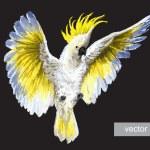 Постер, плакат: Tropical parrots Crested Cockatoo