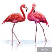 Colorful pink vector flamingo Realistic illustration Blue Lagoon