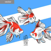 Goldfish illustration artwork  line underwater color vector