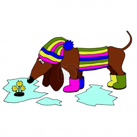 vector image dachshund wearing rubber boots, which looks at the