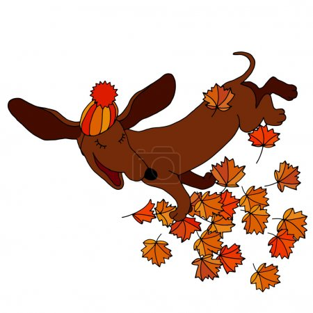 vector drawing dachshund, which throws maple leaves in autumn