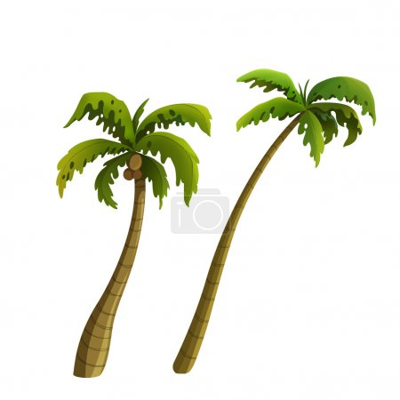 Coconut palm for cartoon isolated