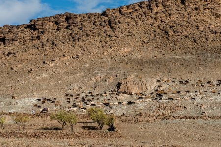 A large flock of sheep and goats