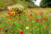 Colorful wild flowes