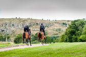 Racehorses in training uphill