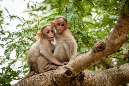 Two young monkeys