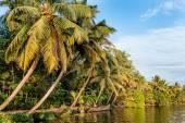 Palm trees and dense vegetation