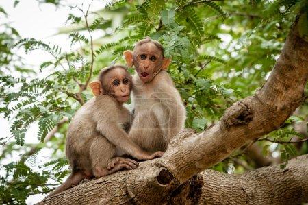 Photo pour Deux jeunes singes assis sur une branche d'arbre - image libre de droit