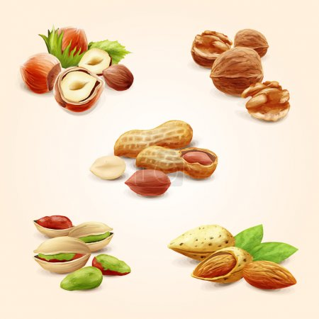 Nuts icons food