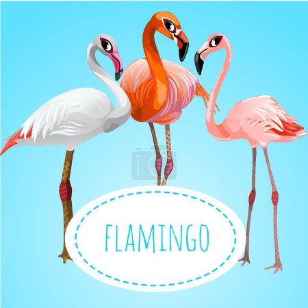 Three beautiful flamingos on a blue background