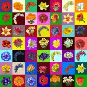 Great set of flowers 49 species