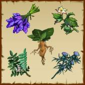 Set of different exotic flowers and Mandrake