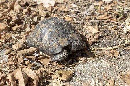 The tortoise closeup