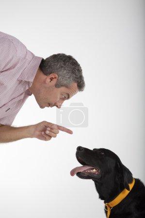 man education Labrador dog