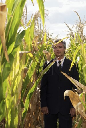 businessman standing in corn field