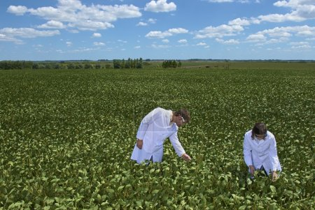 scientists exemining soybean plants