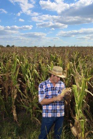 man examining corn