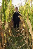 businessman in corn field
