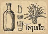 Glass and botlle of tequila Cactus salt and lime  Hand drawn sketch set of alcoholic cocktails Vector illustration