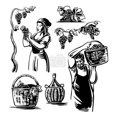 Illustration pour Des hommes et des femmes vendangent les raisins dans la vigne. Illustration vectorielle vintage noir et blanc pour étiquette, affiche, icône, web design - image libre de droit