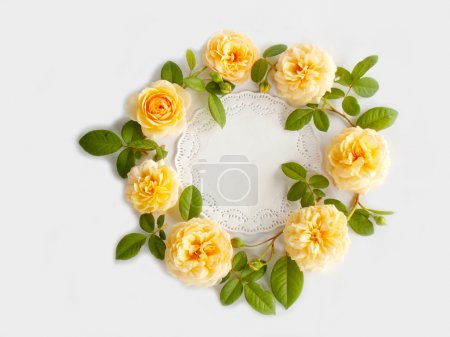 Beautiful English rose flower on white background
