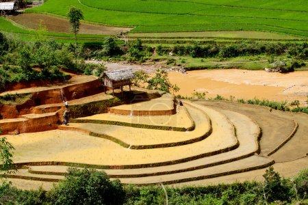 Rice fields and water on terraced of Mu Cang Chai, YenBai, Vietnam.