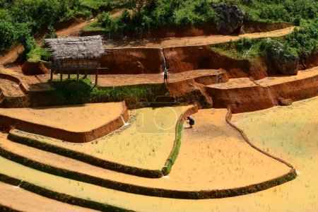 Rice fields and water on terraced of Mu Cang Chai, YenBai, Vietnam. Vietnam landscapes.