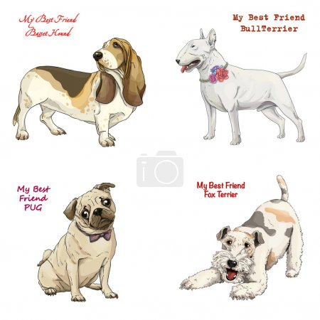 dog breeds set basset hound, bull terrier, fox terrier, pug