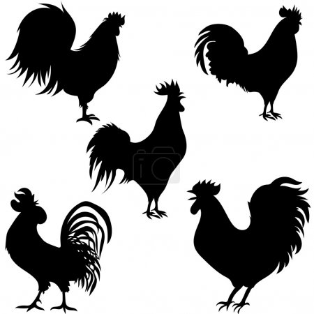 rooster silhouettes on the white background