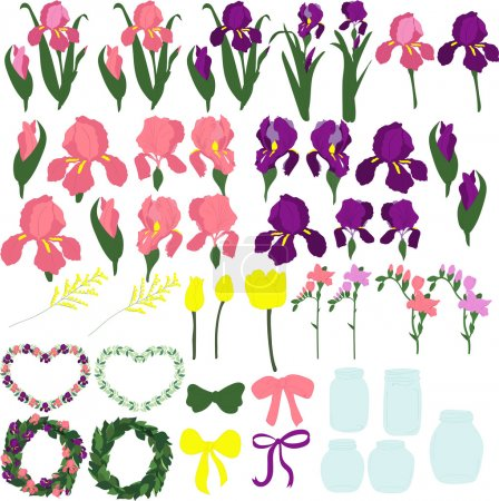 Set of purple and pink irises, the individual parts of the flowers, the buds of irises, leaves of irises, flowers of irises, on a transparent background