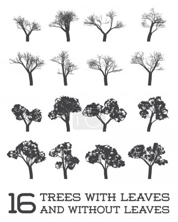 Set of Trees in Silhouettes