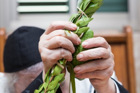 Hands of an elderly man holding the four species in the synagogue . Sukkot