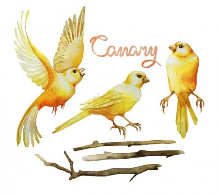 Watercolor canary set