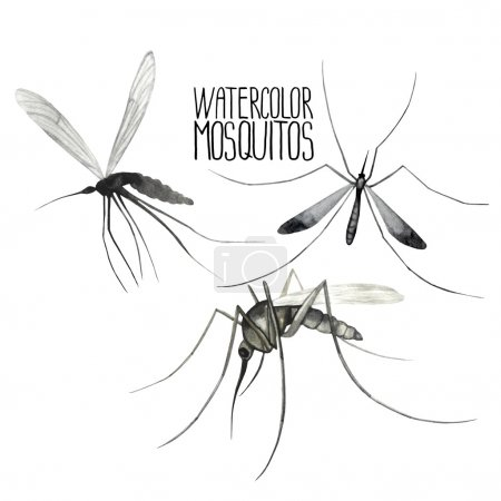 Watercolor set of mosquitoes.