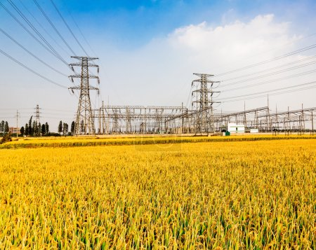 High voltage towers on vast paddy field