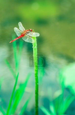 Close-Up of a Dragonfly Perched on a Perfect Unopened Lotus Blossom