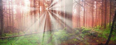 sunrise in Carpathian forest