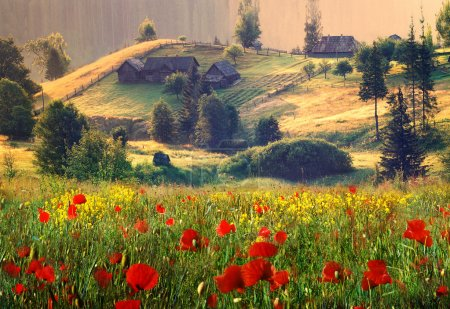 Old farmhouse and wild flowers