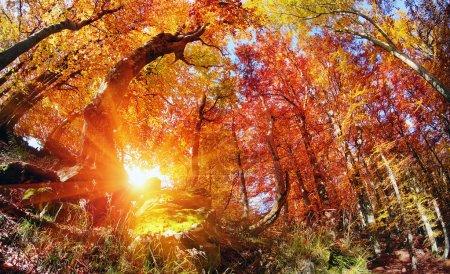 magic Autumn forest