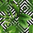 Print summer exotic jungle plant tropical palm lea...