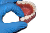 dentist show molar tooth over dental arch