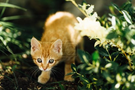 Small cat walking on the garden background