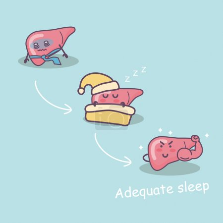 Adequate sleep good for liver