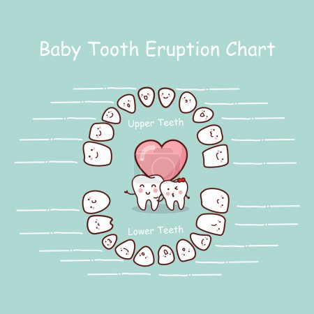 Baby tooth chart record